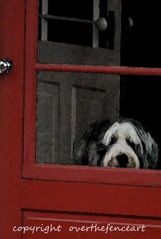 I know that look. (Art Greeting Card Bearded Collie Waits for Your by overthefenceart, $3.75)