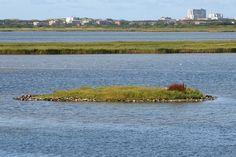 Rantumbecken, Naturschutzgebiet auf der Insel Sylt, im Hintergrund Häuser von Westerland.