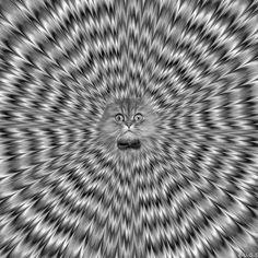 Trippy Kitty Cat