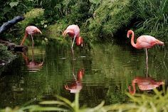 Parque Natural Los Flamencos en el Caribe Colombiano