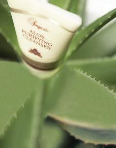 Right from the beginning, Forever Aloe plants are cared for by hand ensuring the best quality product. http://link.flp.social/eLKJ61