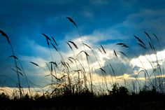 It's getting very windy outside! Please check out these cold and severe weather tips from GC Health Officer Bob Stephens for local resources:. Blue Clouds, Sky And Clouds, Field Wallpaper, New Earth, Seen, White Sky, Health Department, Wallpaper Online, Ecology
