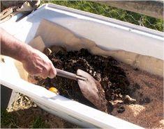 Worm Farm Diy, Earthworm Farm, Meal Worms Raising, Worm Composting, Earthworms, Mason Jars, Bath Tub, Magpie, Farms