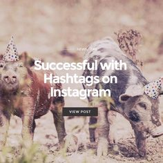 Do you want to be successful with hashtags on Instagram? Read more on blog.squarelovin.com #squarelovin #hashtags #marketingtips #startup Hashtags, Read More, Success, Community, Reading, Tips, Blog, Movie Posters, Instagram