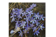 Oil Paintings, Plants, Flora, Oil On Canvas, Plant, Planting