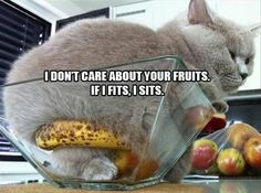 I don't care about your fruits. If I fits, I sits.