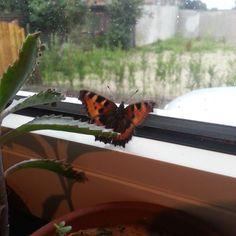 Herzlichen Glückwunsch liebe @beautybutterflies zu Deiner Follower - Schar! (5000) Immer  wenn ich irgendwo Schmetterlinge sehemuss ich an Dich denken.  #butterflies5k