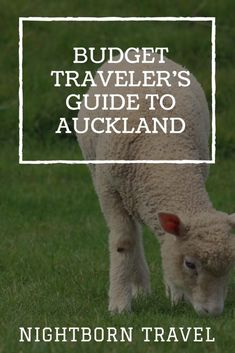Auckland has a lot to offer – and many of its great attractions cost little to no money to see. This humble guide will help you explore the city without breaking the bank. First things first, though. If you weren't thinking about renting a car in New Zealand, I urge you to reconsider. There are …