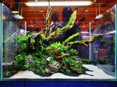 60x40x40h cm layout with Talawa wood and Seiryu stone from the live aquascaping event at Petfestival FIL in Lisbon, Portugal Layout powered by Aquaflora plants, Aqua Design Center and Aquariofilia.Net #FAAO #Aquaflora #Aquascaping #planted #aquarium #aquatic #plant #freshwater #plantedtank #aquascape #plantedaquarium