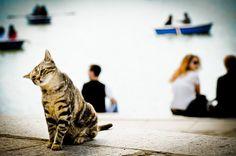 Meow.. by Nachett, via Flickr