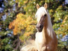 horse beautiful palomino nice horses