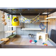 Love the tile bottom Chinchillas, Cute Hamsters, Pet Rats, Hamster Habitat, Hamster Care, Hamster Toys, Ferret Cage, Rat Cage, Critter Nation Cage