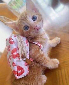 Cute Little Kittens, Cute Baby Cats, Cute Little Animals, Cute Funny Animals, Kittens Cutest, Funny Cats, Pretty Cats, Beautiful Cats, Kitten Quotes