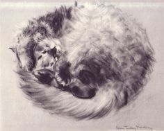 "Illustration ""Ball of fur"" from PANDORA — 1944, by Clare Turlay Newberry"