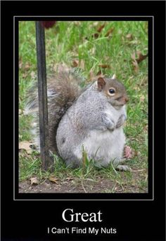 The squirrel has dickey-do.