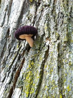 Fungi Yarn Bombing... Knitting with nature www.used2bee.com/en-gb