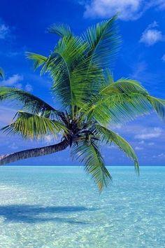 ⚓ #beach #palm #palmtree #ocean #sea #sky #blue #water #photography