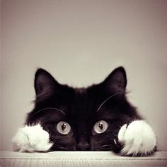 Paws...........adorable