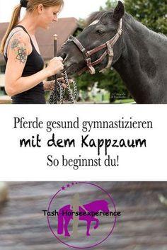 Pferde gesund gymnastizieren! Und: was es mit der Dehnungshaltung auf sich hat.