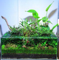 2012 AGA Aquascaping Contest - Entry #224