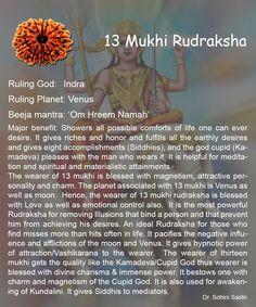13 Mukhi Rudraksha..
