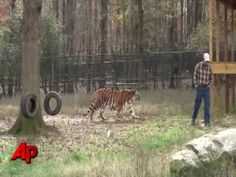 First Person: Bear, Lion, Tiger Living in Harmony