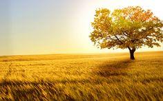 Beautiful Nature   2560 x 1600   Download   Close