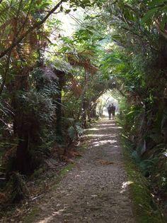 The start of the Heaphy Track, Karamea, NZ 2008
