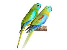 Imagini pentru papagali agapornis Parrot, Bird, Animals, Parrot Bird, Animales, Animaux, Birds, Animal, Animais