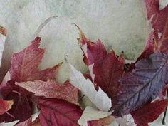 main_2017-11-20 Leaf Tattoos, Leaves