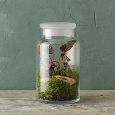 """Topped with a frosted lid, this jar terrarium is crafted from bubbled glass. Humidity-loving plants will flourish with the lid in place; it also makes an ideal display for curios and dried botanicals.- Glass- Hand wash with glass cleaner and damp cloth- Indoor use only- Drainage hole not included- Imported10""""H, 6"""" diameter"""