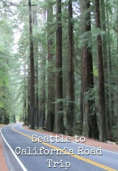 A look at what we did on our Seattle - California road trip family vacation. Redwood Forest, Golden Gate Bridge, Disneyland and more! StuffedSuitcase.com