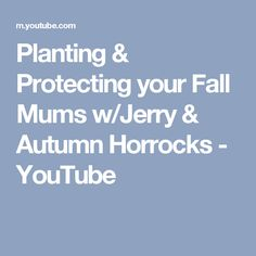 Planting & Protecting your Fall Mums w/Jerry & Autumn Horrocks - YouTube