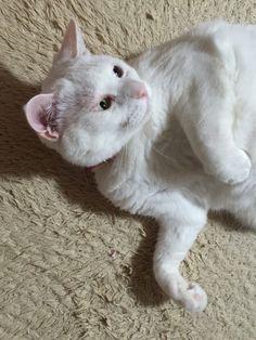 ん?  #cat