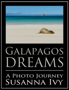 Galapagos Dreams: A Photo Journey by Susanna Ivy