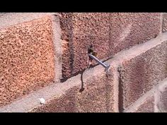 Super Strong Bee Pulls Nail From Wall Play Video.......