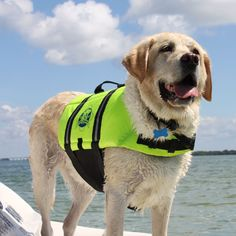 Constructed to provide buoyancy, along with a cozy secure fit, the Paws Aboard Pet Life Jacket features an advanced breathable mesh underbelly for proper draining and drying, which provides your dog more comfort and healthy conditions.