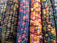 Glass Gem Corn: The result are rainbow-colored corn cobs. Rainbow Corn, Colored Corn, Glass Gem Corn, Popcorn Seeds, Mexican Corn, Gourmet Popcorn, Comida Latina, Corn On Cob, Sweet Corn