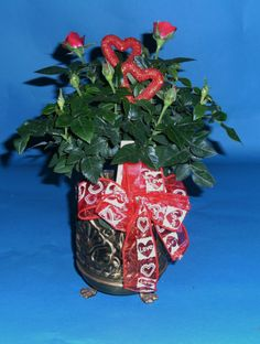 MINITUARE ROSE BUSH WITH HEART RIBBON IN A BRASS FOOTED CONTAINER