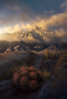 Sierra Awakens photo