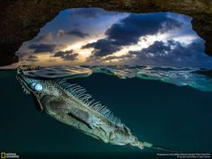 Lorenzo Mittiga  The iguanas cave