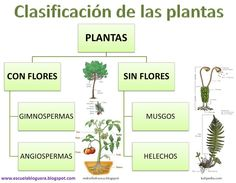 Clasificación de las plantas Plant Science, Science And Nature, Sistema Solar, Reggio Emilia, Holidays And Events, Learning Activities, Place Card Holders, Decimal, School