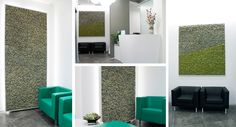 Realization with the use of the new MOSSwall® shades, the color grey for two walls of Studio Boni, a dental studio. The realization was possible thanks to the hypoallergenic characteristic that the product has, in fact MOSSwall® don't attract insects, dust, and it is a material 100 % Hypoallergenic and free of bacteria.  #Green #Moss #Nature #Art #Colors #Natural #Grey #Verticalgarden #Stabilizedmoss #Design #Architecture #Innovation #Hypoallergenic #Antistatic #Patented #dental #health