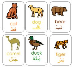 TJ Homeschooling| Arabic animal vocabulary flashcards. These picture flashcards include the names of the animals in English and Arabic, which could be useful for newcomer or low English proficiency ELLs who are native Arabic speakers.