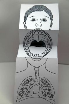 Paper Anatomic Mouth Puppet - It is the perfect tool for teaching the anatomy of…