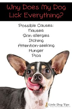 Possible reasons for excessive licking in #dogs. #LifeInsuranceFacts