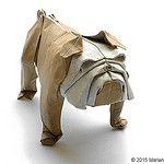 Bulldog - Mariano Zavala B. by Mariano Zavala B