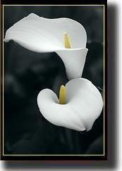 lily16.jpg