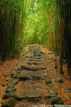 Bamboo Jungle Path