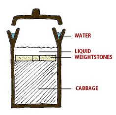how a fermentation crock works #crock #fermentation
